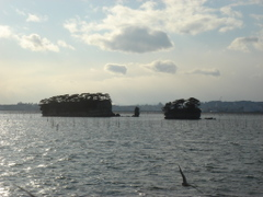 Nice_shadowed_view_of_pines_2